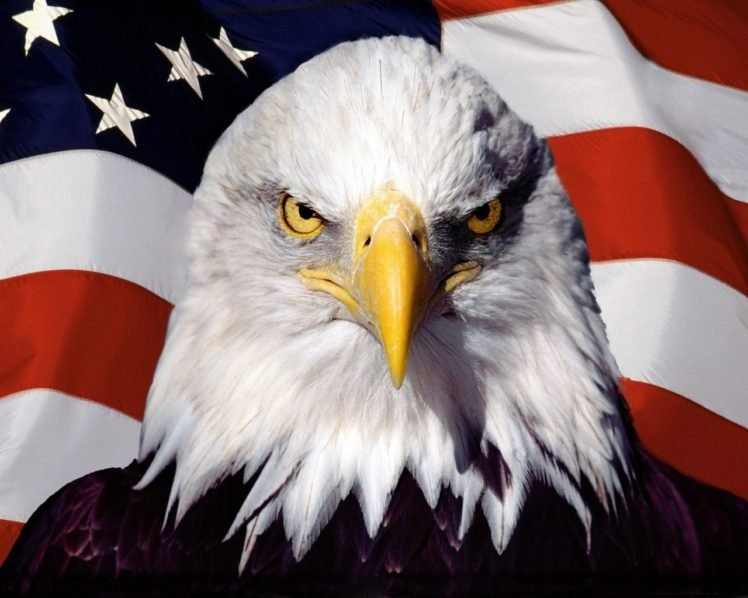 Eagle American Flag HD Wallpaper Desktop Background