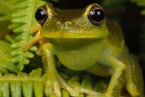 frog, Amphibian, Ferns