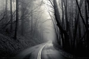 mist, Black, Road, Trees