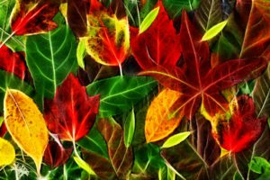leaves, Fall, Red, Green, Yellow