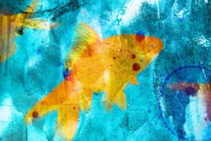 fish, Goldfish, Blue, Graffiti