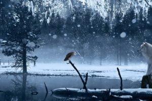 wolf, Snow