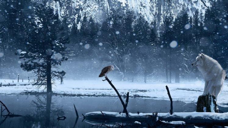 wolf, Snow HD Wallpaper Desktop Background