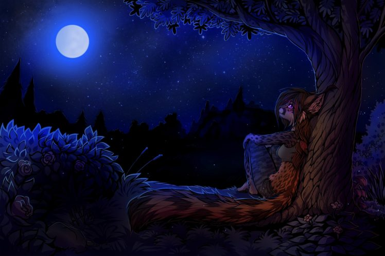 furry, Night HD Wallpaper Desktop Background