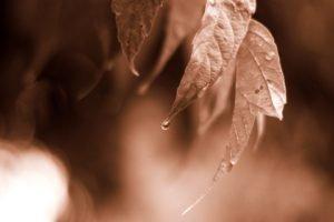 leaves, Monochrome, Water drops