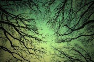 monochrome, Worms eye view, Trees, Branch