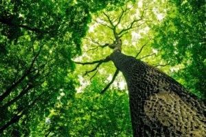 trees, Sunny, Fresh