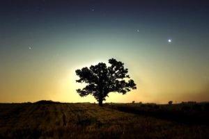 trees, Stars