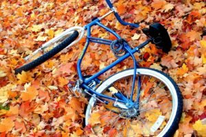 bicycle, Leaves