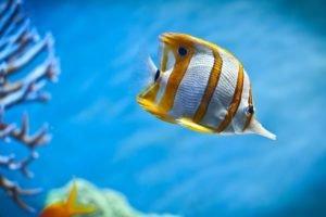 fish, Underwater