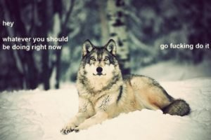wolf, Motivational