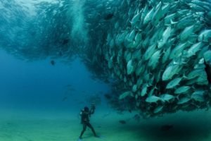 underwater, Photography, Fish, Divers, Shoal of fish