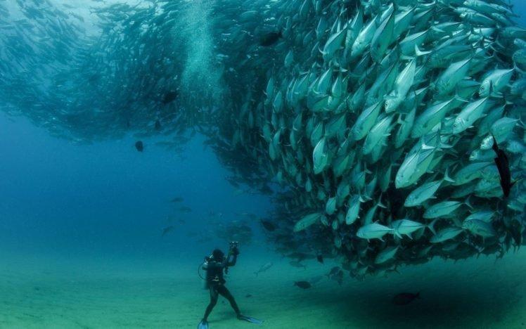 underwater, Photography, Fish, Divers, Shoal of fish HD Wallpaper Desktop Background