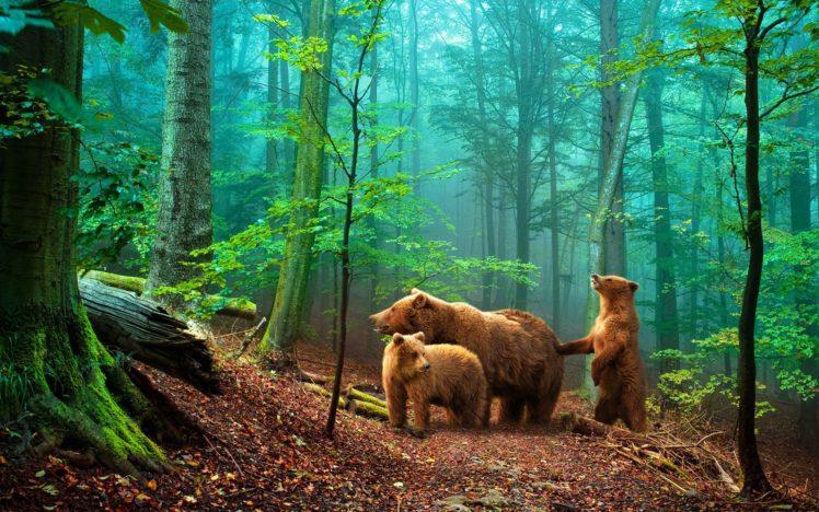 bears HD Wallpaper Desktop Background