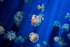 jellyfish, Underwater
