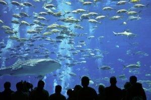 fish, Underwater, Aquarium