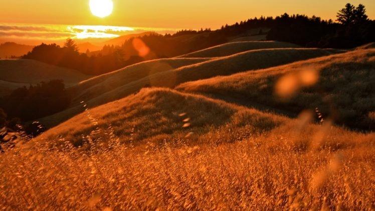 field HD Wallpaper Desktop Background