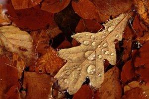 macro, Leaves, Water drops