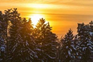 trees, Snow, Sun
