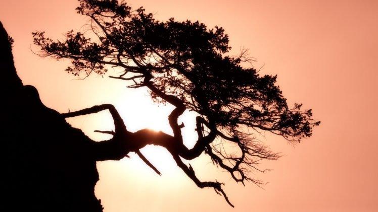 trees HD Wallpaper Desktop Background