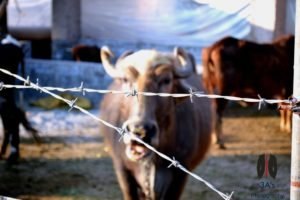 cows, Photography