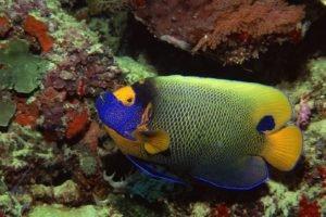 underwater, Fish, Colorful