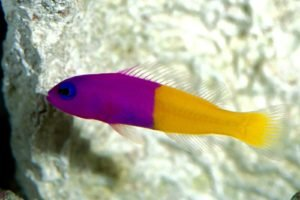 underwater, Fish
