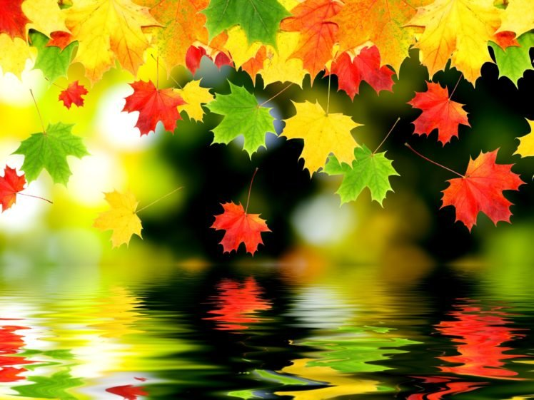 leaves HD Wallpaper Desktop Background