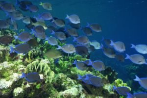 underwater, Fish, Coral