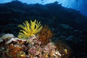 underwater, Coral, Sea anemones, Fish