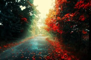 road, Fall, Red, Trees