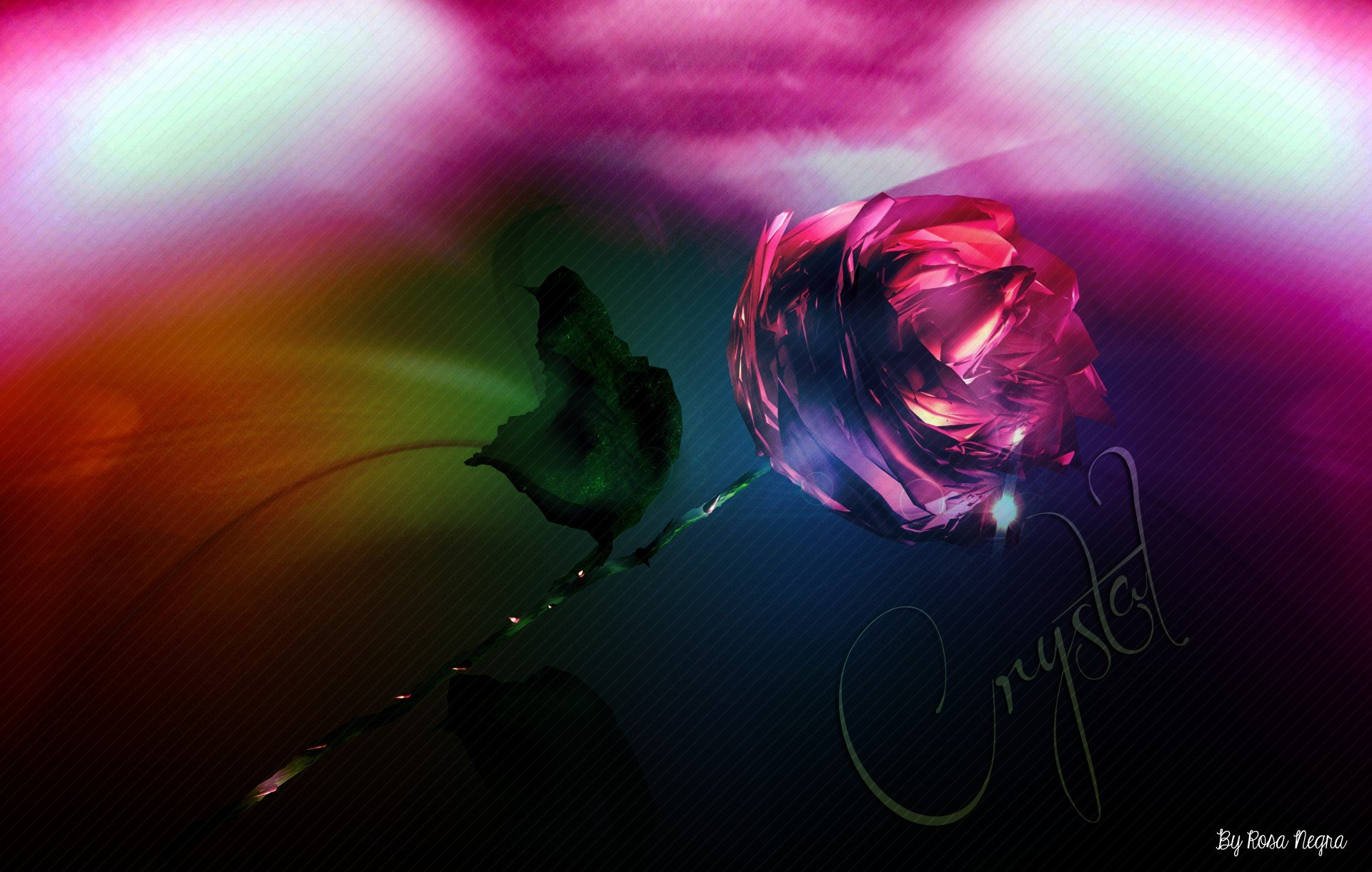 Rose HD Wallpapers / Desktop And Mobile Images & Photos