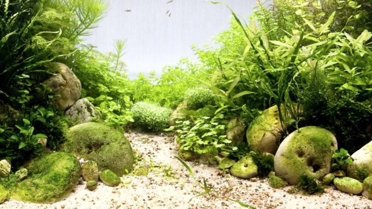 Download 420+ Background Desktop Aquarium Gratis Terbaru