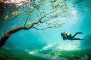 underwater, Branch, Divers