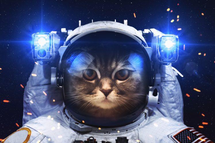 Astronaut Cat HD Wallpaper Desktop Background