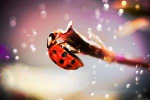 macro, Ladybugs