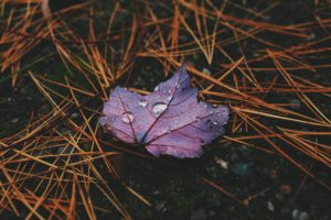 water drops, Leaves, Photography