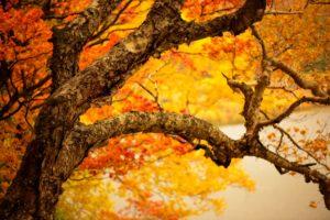 trees, Leaves