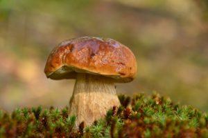 macro, Mushroom, Moss