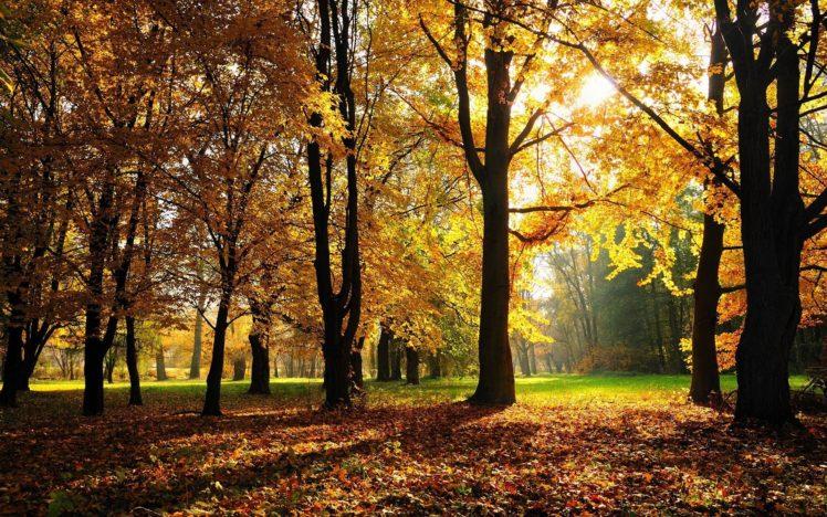 trees, Fall HD Wallpaper Desktop Background