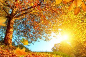 Sun, Trees, Fall