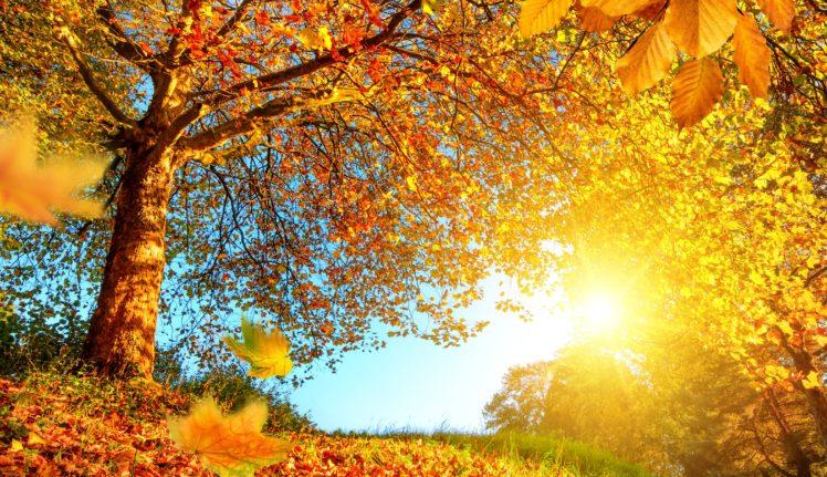 Sun, Trees, Fall HD Wallpaper Desktop Background