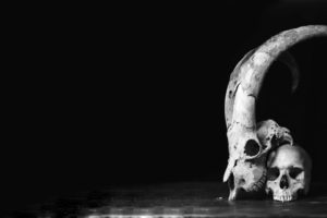 skull, Black, White, Horns, Monochrome