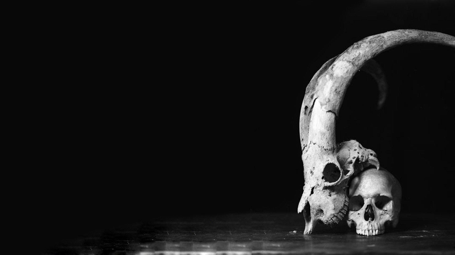 skull, Black, White, Horns, Monochrome HD Wallpapers ...
