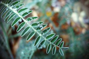 macro, Water drops, Leaves