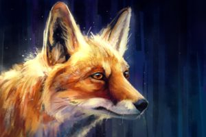 fox, Animals