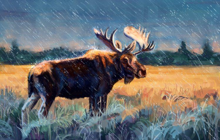 elk, Animals, Moose HD Wallpaper Desktop Background
