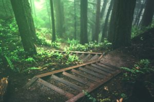 trees, Stairs, Deep forest, Forest, Nature, Plants, Jungle