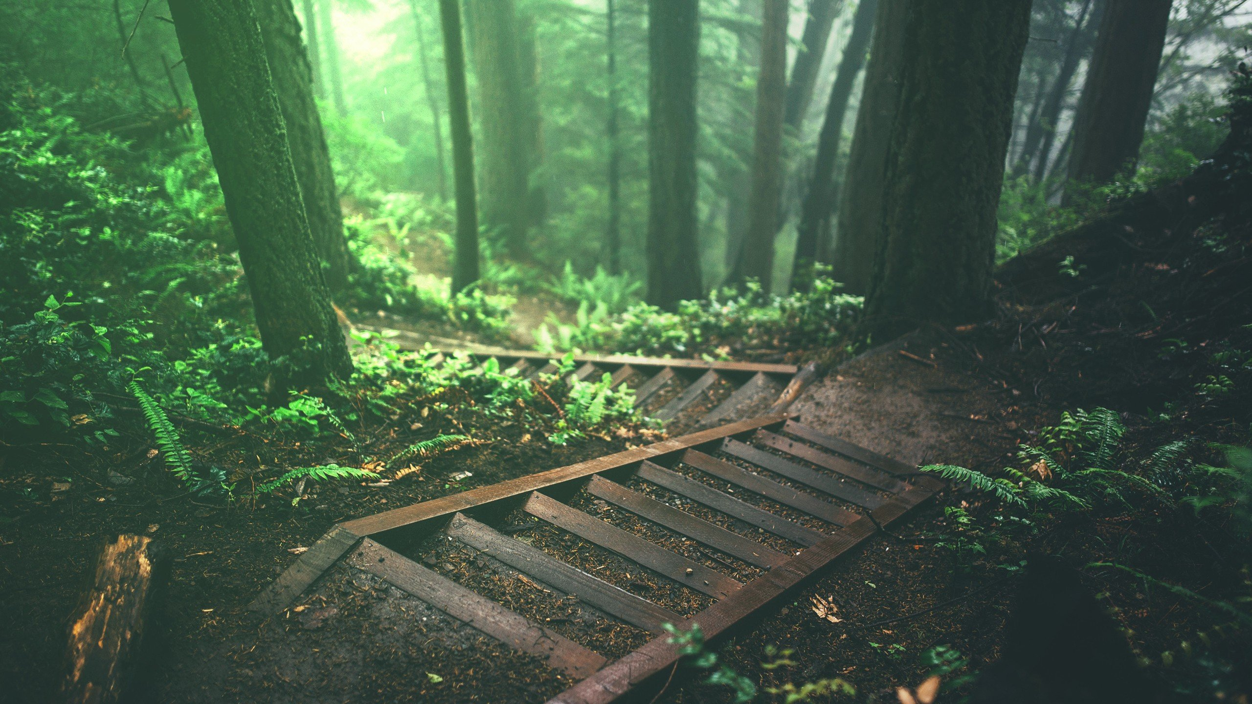 trees stairs deep forest forest nature plants jungle