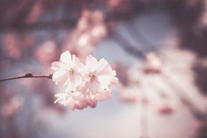 nature, Plants, White flowers